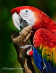 Color Me Macaw