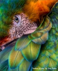 Feathers & Color